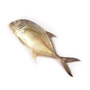 Paraw fish (trevallies) now available at meatmart.lk