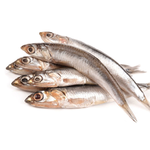 An anchovy is a small, common salt-water forage fish of the family Engraulidae. The 144 species are placed in 17 genera, they are found in the Atlantic, Indian etc. now available at meatmart.lkAn anchovy is a small, common salt-water forage fish of the family Engraulidae. The 144 species are placed in 17 genera, they are found in the Atlantic, Indian etc. now available at meatmart.lk
